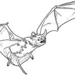 Flying-bat 1